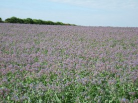 Borage oil is just one of the raw materials which Peter Clough can source